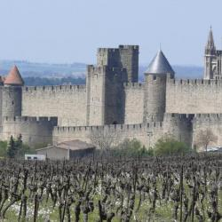 Medieval castle and its vineyards